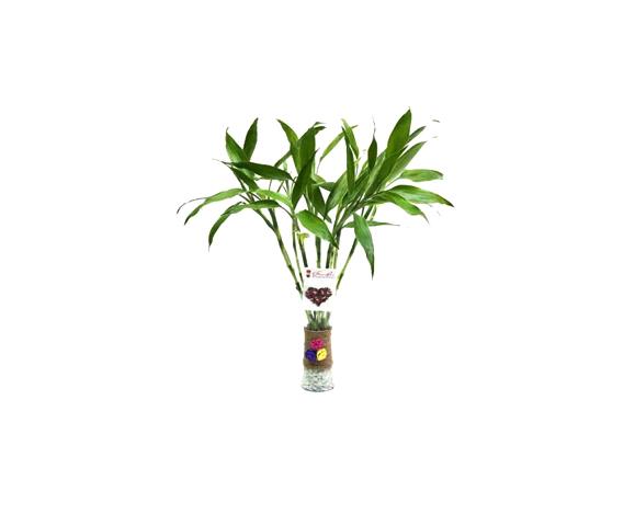 chutiya bamboo with vase